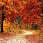 Warum ich den Herbst liebe - 8 Gründe