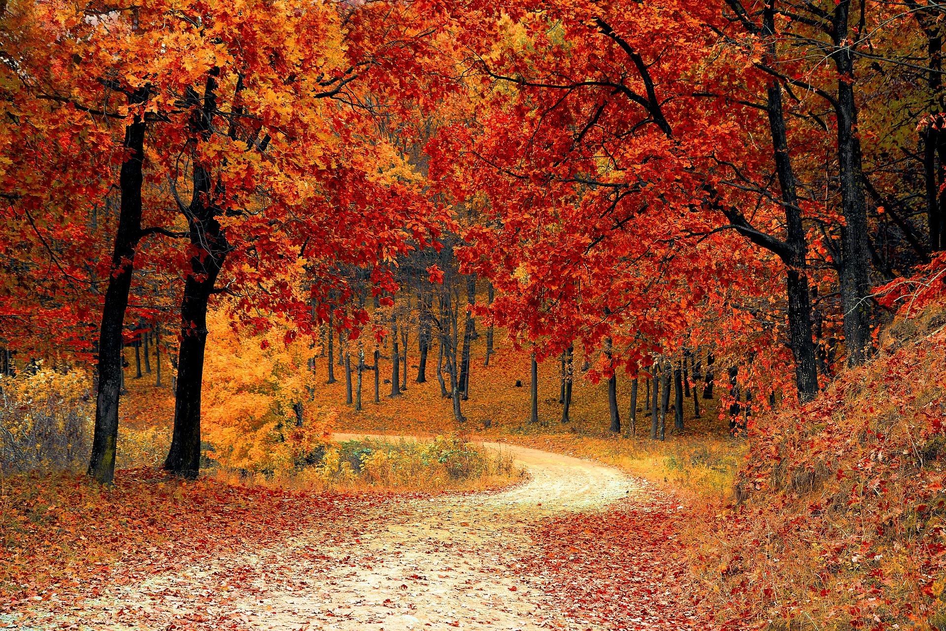 Waldweg im Herbst